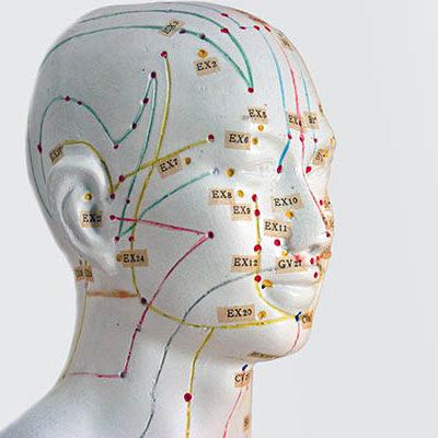 Akupunktur Model - Traditionelle Chinesische Medizin